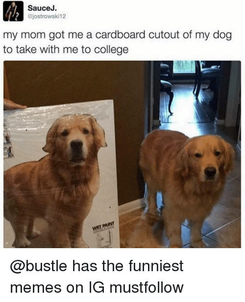 Sauced: Sauce J.  ajostrowski12  my mom got me a cardboard cutout of my dog  to take with me to college  wETAINT @bustle has the funniest memes on IG mustfollow