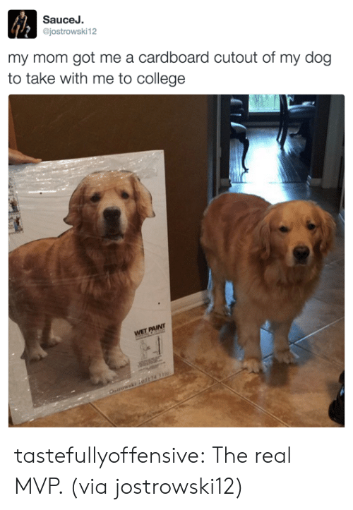 Cutout: SauceJ.  @jostrowski12  my mom got me a cardboard cutout of my dog  to take with me to college tastefullyoffensive:  The real MVP. (via jostrowski12)