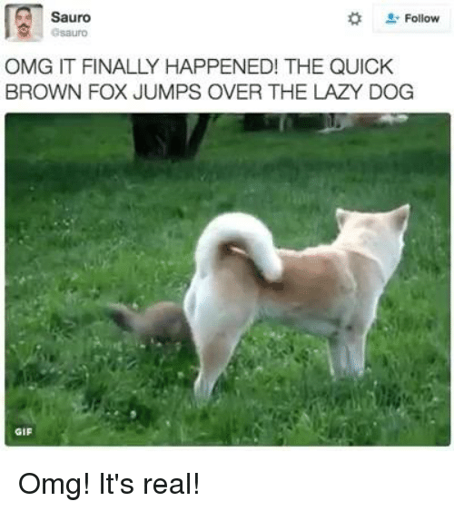 Gif, Lazy, and Memes: Sauro  Follow  OMG IT FINALLY HAPPENED! THE QUICK  BROWN FOX JUMPS OVER THE LAZY DOG  GIF Omg! It's real!