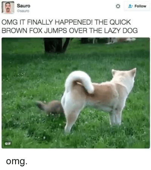 Gif, Lazy, and Memes: Sauro  Follow  OMG IT FINALLY HAPPENED! THE QUICK  BROWN FOX JUMPS OVER THE LAZY DOG  GIF omg.