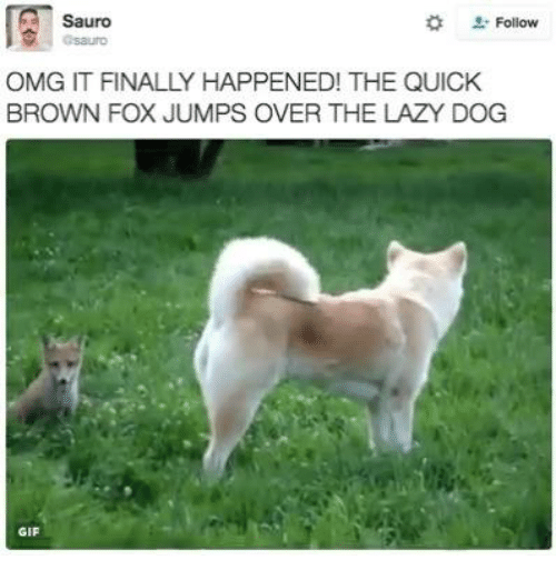 Lazy, Memes, and Browns: Sauro  Follow  OMG IT FINALLY HAPPENED! THE QUICK  BROWN FOX JUMPS OVER THE LAZY DOG