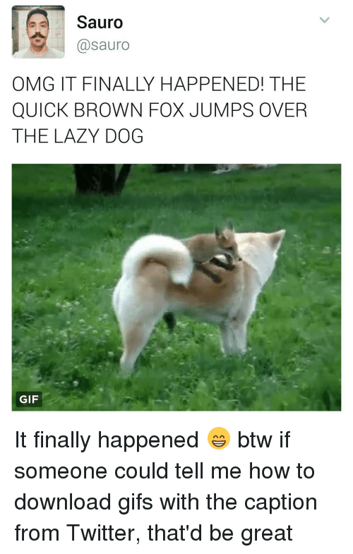Gif, Lazy, and Memes: Sauro  @sauro  OMG IT FINALLY HAPPENED! THE  QUICK BROWN FOX JUMPS OVER  THE LAZY DOG  GIF It finally happened 😁 btw if someone could tell me how to download gifs with the caption from Twitter, that'd be great