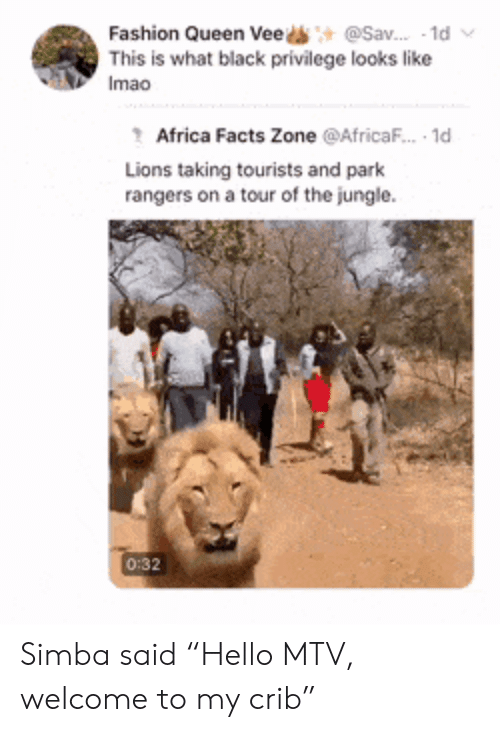 """jungle: @Sav. 1d  Fashion Queen Vee  This is what black privilege looks like  Imao  Africa Facts Zone @AfricaF.. 1d  Lions taking tourists and park  rangers on a tour of the jungle  0:32 Simba said """"Hello MTV, welcome to my crib"""""""