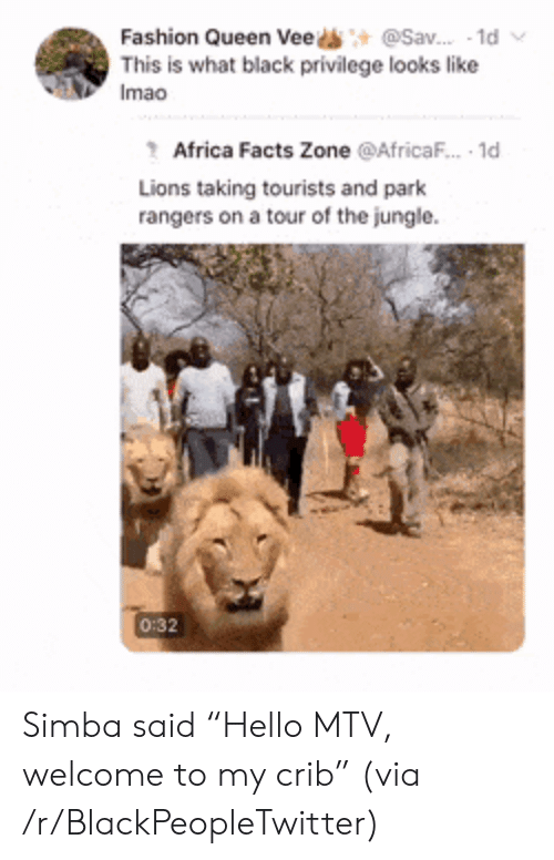 """Welcome To My Crib: @Sav. 1d  Fashion Queen Vee  This is what black privilege looks like  Imao  Africa Facts Zone @AfricaF.. 1d  Lions taking tourists and park  rangers on a tour of the jungle  0:32 Simba said """"Hello MTV, welcome to my crib"""" (via /r/BlackPeopleTwitter)"""