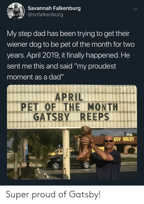 """gatsby: Savannah Falkenburg  V @snfalkenburg  My step dad has been trying to get their  wiener dog to be pet of the month for two  years. April 2019, it finally happened. He  sent me this and said """"my proudest  moment as a dad""""  APRIL  PET OF THE MONTHIT  GATSBY REEPS  eer Super proud of Gatsby!"""