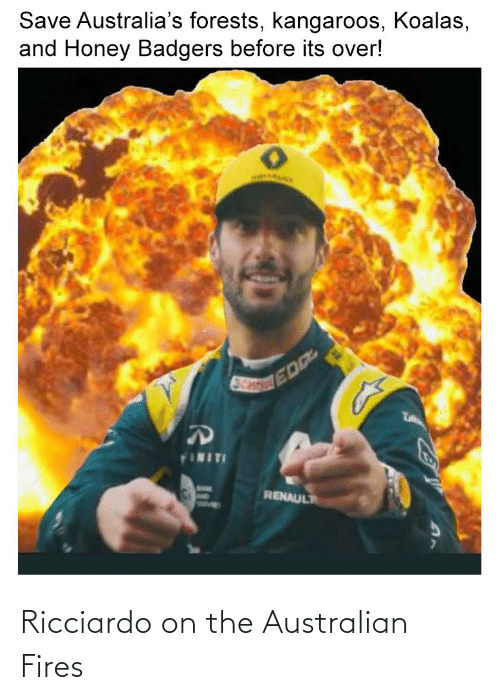 honey badgers: Save Australia's forests, kangaroos, Koalas,  and Honey Badgers before its over!  TA  FINITI  RENAULT Ricciardo on the Australian Fires