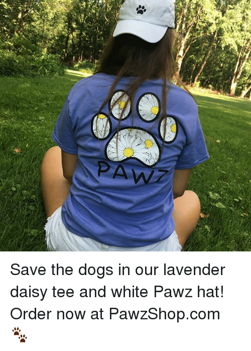 Dogs, Memes, and White: Save the dogs in our lavender daisy tee and white Pawz hat! Order now at PawzShop.com 🐾