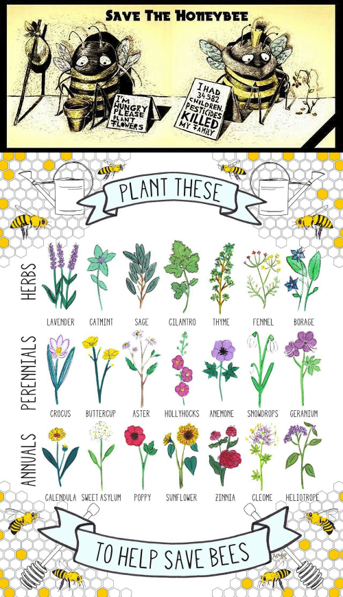im hungry: SAVE THE HONEYBEE  IHAD  34582  CHILDREN  PESTICIDES  KILLED  MY TAMILY  IM  HUNGRY  PLEASE  PLANT  FLOWERS   PLANT THESE  FENNEL  BORAGE  LAVENDER  CATMINT  SAGE  CILANTRO  THYME  CROCUS  BUTTERCUP  ASTER  SNOWDROPS  GERANIUM  HOLLYHOCKS ANEMONE  HELIOTROPE  POPPY  SUNFLOWER  ZINNIA  CLEOME  CALENDULA SWEET ASYLUM  10 HELP SAVE BEES  HMR  ANNUALS PERENNIALS  HERBS  ఇత