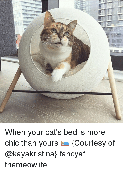 Cats, Memes, and 🤖: saved When your cat's bed is more chic than yours 🛌 {Courtesy of @kayakristina} fancyaf themeowlife