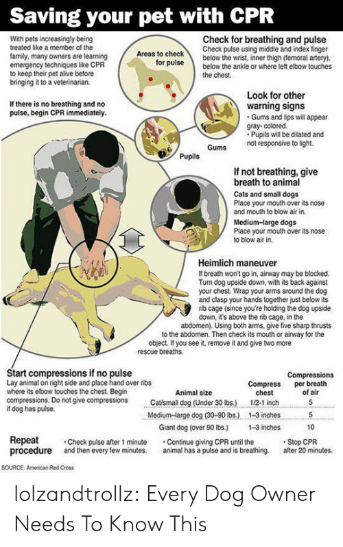 cpr: Saving your pet with CPR  Check for breathing and pulse  Check pulse using middle and index finger  below the wrist, inner thigh (temoral artery).  below the ankle or where left elbow touches  With pets increasingly being  treated like a member of the  Areas to check  family, many owners are learning  emergency techniques like CPR  to keep their pet alive before  bringing it to a veterinarian.  for pulse  the chest  Look for other  warning signs  Gums and lips will appear  gray- colored.  Pupils will be dilated and  not responsive to light  If there is no breathing and no  pulse, begin CPR immediately.  Gums  Pupils  If not breathing, give  breath to animal  Cats and small dogs  Place your mouth over its nose  and mouth to blow air in.  Medium-large dogs  Place your mouth over its nose  to blow air in  Heimlich maneuver  If breath won't go in, airway may be blocked.  Turn dog upside down, with its back against  your chest. Wrap your arms around the dog  and clasp your hands together just below its  rib cage (since you're holding the dog upside  down, it's above the rib cage, in the  abdomen). Using both arms, give five sharp thrusts  to the abdomen. Then check its mouth or airway for the  object. If you see it, remove it and give two more  rescue breaths  Start compressions if no pulse  Lay animal on right side and place hand over ribs  where its elbow touches the chest. Begin  compressions. Do not give compressions  if dog has pulse.  Compressions  per breath  of air  Compress  chest  Animal size  Catsmall dog (Under 30 lbs.)  5  1/2-1 inch  Medium-large dog (30-90 lbs.)  1-3 inches  5  Giant dog (over 90 lbs.)  1-3 inches  10  Repeat  procedure  Stop CPR  after 20 minutes.  Check pulse after 1 minute  and then every few minutes.  Continue giving CPR until the  animal has a puise and is breathing.  soURCE  American Red Cross lolzandtrollz:  Every Dog Owner Needs To Know This