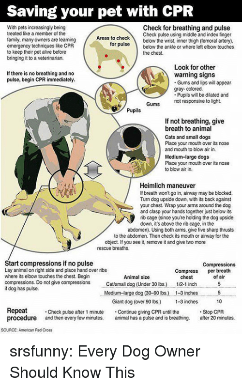 cpr: Saving your pet with CPR  With pets increasingly being  treated like a member of the  family, many owners are learning  emergency techniques like CPR  to keep their pet alive before  bringing it to a veterinarian.  Check for breathing and pulse  Check pulse using middle and index finger  as to checkbelow the wrist, inner thigh (temoral artery)  ruse below the ankle or where left elbow touches  for  the chest.  Look for other  If there is no breathing and no  pulse, begin CPR immediately.  warning signs  Gums and lips will appear  gray- colored.  Pupils will be dilated and  not responsive to light.  Pupils  If not breathing, give  breath to animal  Cats and small dogs  Place your mouth over its nose  and mouth to blow air in.  Medium-large dogs  Place your mouth over its nose  to blow air in.  Heimlich maneuver  If breath won't go in, airway may be blocked.  Tun dog upside down, with its back against  your chest. Wrap your arms around the dog  and clasp your hands together just below its  rib cage (since you're holding the dog upside  down, it's above the rib cage, in the  abdomen). Using both arms, give five sharp thrusts  to the abdomen. Then check its mouth or airway for the  object. If you see it, remove it and give two more  rescue breaths.  Start compressions if no pulse  Lay animal on right side and place hand over ribs  where its elbow touches the chest. Begin  compressions. Do not give compressions tsmall dog (Under 30 lbs.)  if dog has pulse.  Compressions  Compress per breath  Animal size  chest  12-1 inch  of air  Medium-arge dog (30-90 lbs.) . 1-3 inches5  10  Giant dog (over 90 lbs) -3 inches  Repeat  procedure and then every few minutes. al has a pulse and is breathing. after 20 minutes.  Check pulse after 1 minute Continue giving CPR until the  Stop CPR  SOURCE: American Red Cross srsfunny:  Every Dog Owner Should Know This
