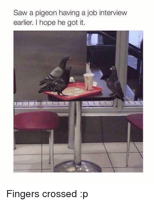 Job Interview, Memes, and Saw: Saw a pigeon having a job interview  earlier. hope he got it. Fingers crossed :p