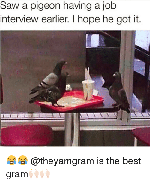 Funny, Job Interview, and Job: Saw a pigeon having a job  interview earlier. I hope he got it. 😂😂 @theyamgram is the best gram🙌🏻🙌🏻