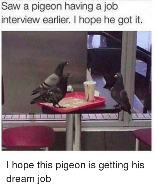 Job Interview, Saw, and Hope: Saw a pigeon having a job  interview earlier. I hope he got it. I hope this pigeon is getting his dream job