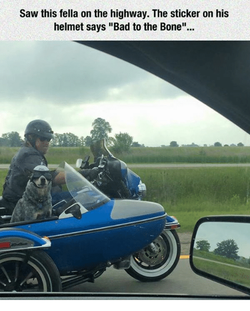 """Bad To The Bone: Saw this fella on the highway. The sticker on his  helmet says """"Bad to the Bone""""."""