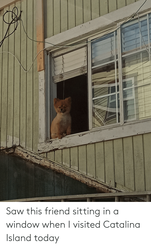 catalina: Saw this friend sitting in a window when I visited Catalina Island today