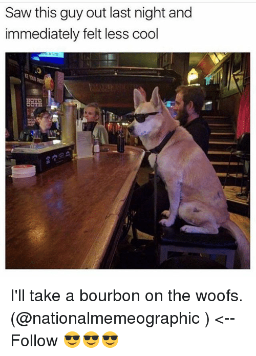 Memes, Saw, and Cool: Saw this guy out last night and  immediately felt less cool I'll take a bourbon on the woofs. (@nationalmemeographic ) <-- Follow 😎😎😎