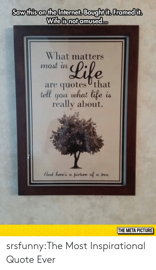 Not Amused: Saw thison the Interneft Boughtft, Framed it  Wife is not amused.  What matters  moat in  Lile  are quotes Uthat  tell you what life is  really about.  Ind here's a picture of a tree.  THE META PICTURE srsfunny:The Most Inspirational Quote Ever
