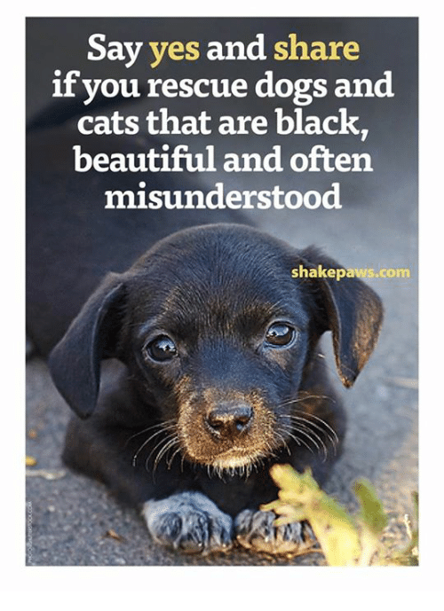 memes: Say yes  and share  if you rescue dogs and  cats that are black,  beautiful and often  misunderstood  shakepaws.com