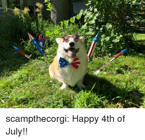 happy 4th of july: scampthecorgi:  Happy 4th of July!!