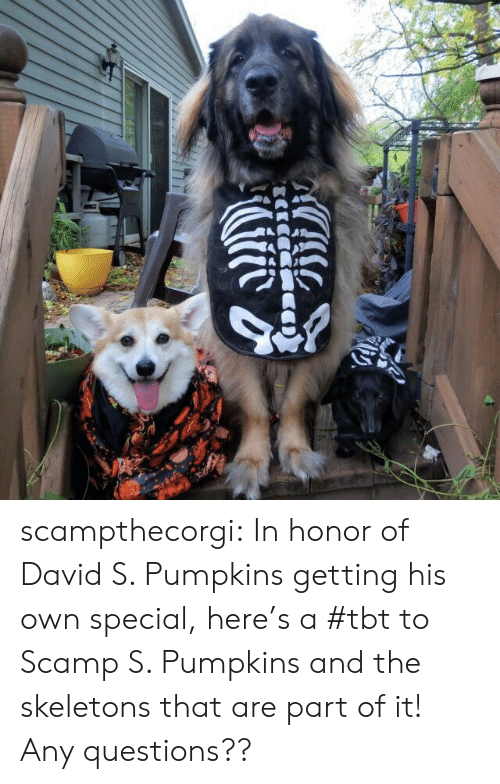 David S Pumpkins: scampthecorgi:  In honor of David S. Pumpkins getting his own special, here's a #tbt to Scamp S. Pumpkins and the skeletons that are part of it! Any questions??