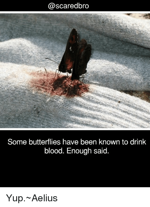 enough said: @scaredbro  Some butterflies have been known to drink  blood. Enough said. Yup.~Aelius