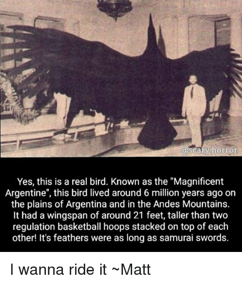 "ride it: @scary horror  Yes, this is a real bird. Known as the ""Magnificent  Argentine"", this bird lived around 6 million years ago on  the plains of Argentina and in the Andes Mountains.  It had a wingspan of around 21 feet, taller than two  regulation basketball hoops stacked on top of each  other! It's feathers were as long as samurai swords. I wanna ride it ~Matt"