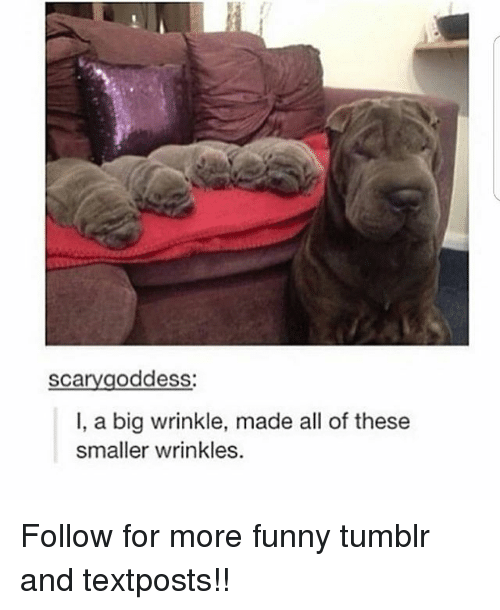 wrinkle: scarygoddess:  I, a big wrinkle, made all of these  smaller wrinkles. Follow for more funny tumblr and textposts!!
