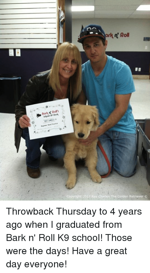 Throwback Thursday: school Rod  Roll  Copyright 2017 Ray Charles The Golden Retriever Throwback Thursday to 4 years ago when I graduated from Bark n' Roll K9 school! Those were the days! Have a great day everyone!