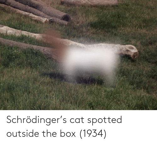 the box: Schrödinger's cat spotted outside the box (1934)