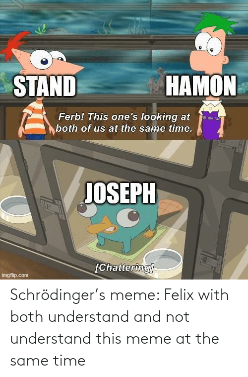 at the same time: Schrödinger's meme: Felix with both understand and not understand this meme at the same time