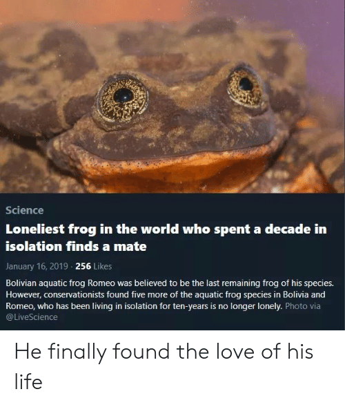 Frog Species: Science  Loneliest frog in the world who spent a decade in  isolation finds a mate  January 16, 2019 256 Likes  Bolivian aquatic frog Romeo was believed to be the last remaining frog of his species.  However, conservationists found five more of the aquatic frog species in Bolivia and  Romeo, who has been living in isolation for ten-years is no longer lonely. Photo via  @LiveScience He finally found the love of his life