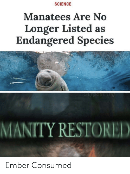 species: SCIENCE  Manatees Are No  Longer Listed as  Endangered Species  Lng  MANITY RESTORED Ember Consumed