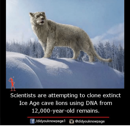 Memes, Ice Age, and Lion: Scientists are attempting to clone extinct  Ice Age cave lions using DNA from  12,000-year-old remains.  /didyouknowpage  @didyouknowpage