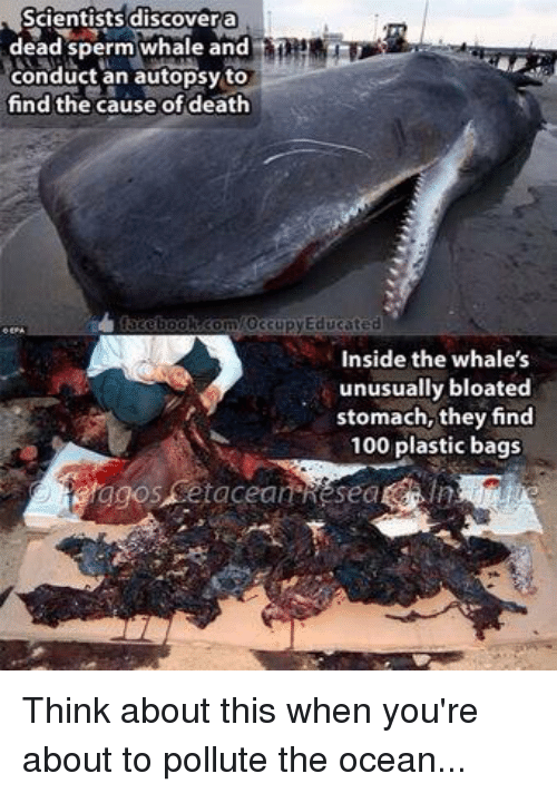memes: Scientists discover a  dead sperm whale and  conduct an autopsy to  find the cause of death  Occupy Educated  Inside the whale's  unusually bloated  stomach, they find  100 plastic bags Think about this when you're about to pollute the ocean...