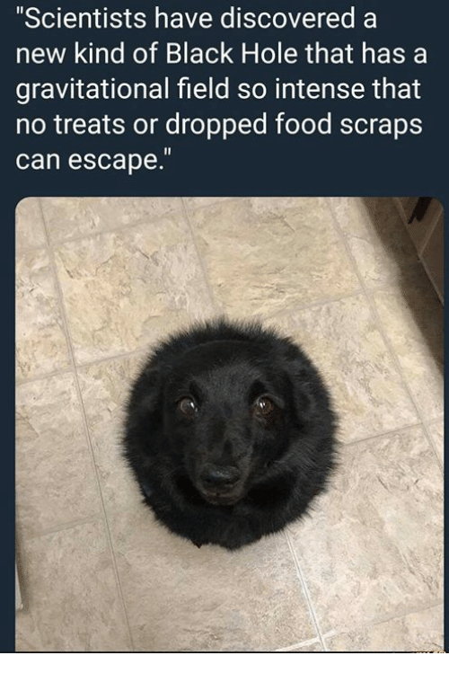 """Food, Black, and Humans of Tumblr: """"Scientists have discovered a  new kind of Black Hole that has a  gravitational field so intense that  no treats or dropped food scraps  can escape."""