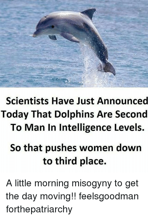 feelsgoodman: Scientists Have Just Announced  Today That Dolphins Are Second  To Man In Intelligence Levels.  So that pushes women down  to third place. A little morning misogyny to get the day moving!! feelsgoodman forthepatriarchy