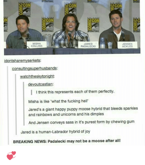 "Memes, Giant, and Giants: SCON  SCON  SCON  MISHA  JARED  JENSEN  COLLINS  PADALECKI  ACKLES  idontsharemyserkets:  consultingsuperhusbands:  onight  watchthes  devoutcastian  I I think this represents each of them perfectly.  Misha is like ""what the fucking hell'  Jared's a giant happy puppy moose hybrid that bleeds sparkles  and rainbows and unicorns and his dimples  And Jensen conveys sass in it's purest form by chewing gum  Jared is a human-Labrador hybrid of joy  BREAKING NEWS: Padalecki may not be a moose after all! 💞"