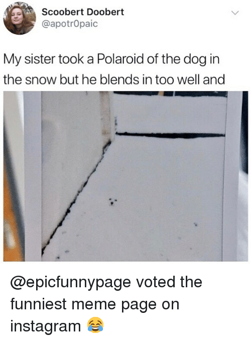 Scoobert Doobert: Scoobert Doobert  @apotrOpaic  My sister took a Polaroid of the dog in  the snow but he blends in too well and @epicfunnypage voted the funniest meme page on instagram 😂