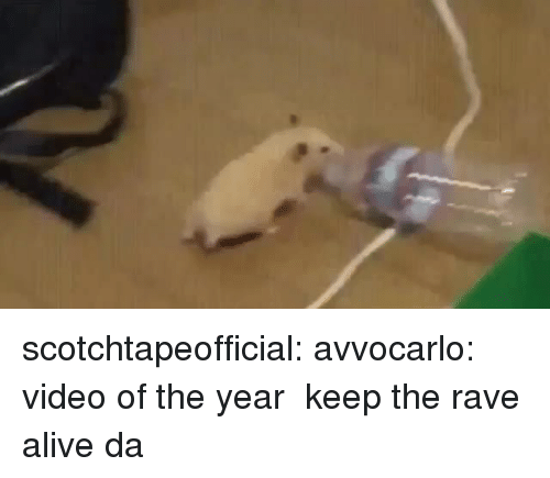 Rave: scotchtapeofficial: avvocarlo: video of the year  keep the rave alive da