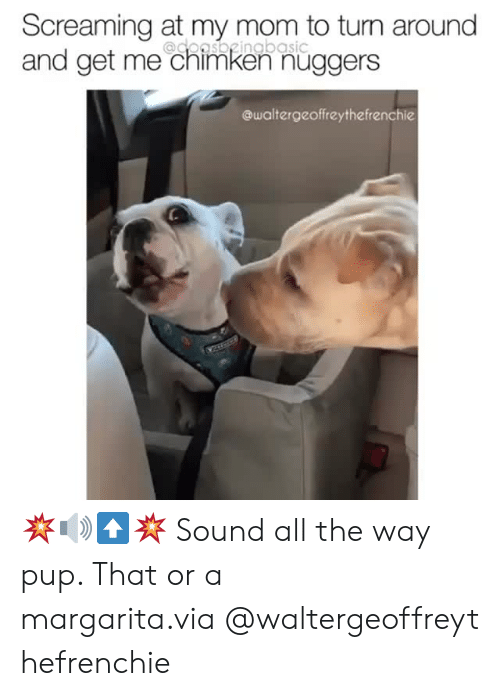 margarita: Screaming at my mom to turn around  and get me chimken nüggers  @doasbgingbasic  @waltergeoffreythefrenchie 💥🔊⬆️💥 Sound all the way pup. That or a margarita.via@waltergeoffreythefrenchie