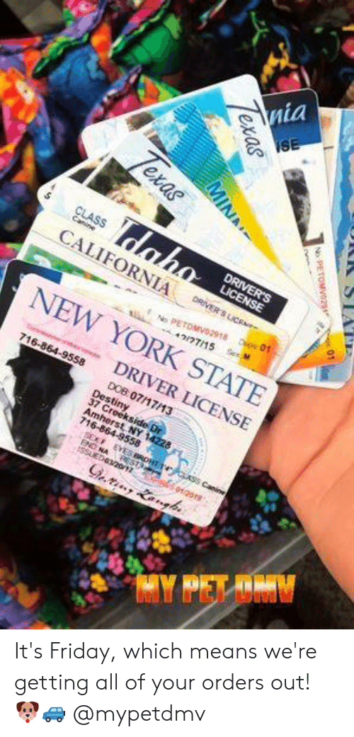 dabo: SE  Texas  dabo  CLASS  Canine  DRIVER'S  LICENSE  CALIFORNIA  DRIVER'S LICe  Dsos 01  No PETDMVO2918  42/77/15  Sex M  NEW YORK STATE  DRIVER LICENSE  716-864-9558  DOB 07/17/13  Destiny  37 Creekside Dr  Amherst NY 14228  716-864-9558  3 ASS Canine  SEX  NA REST  oigors  SED20/12  Gring Langh  R STA  PETOMV0291 01  Texas  MINA It's Friday, which means we're getting all of your orders out! 🐶🚙  @mypetdmv