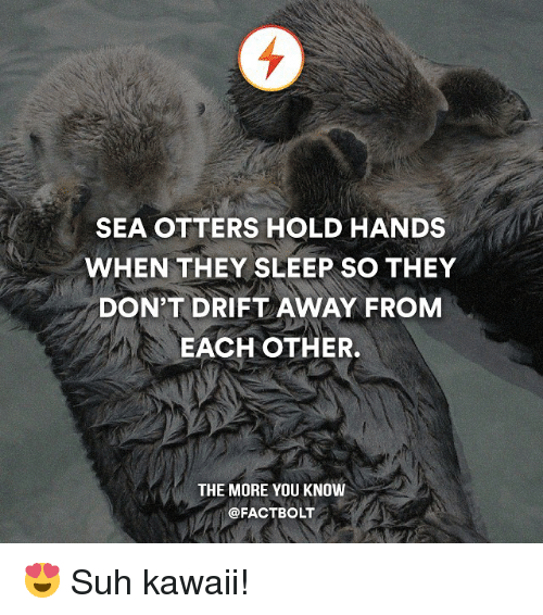 sea otter: SEA OTTERS HOLD HANDS  WHEN THEY SLEEP SO THEY  DON'T DRIFT AWAY FROM  EACH OTHER.  THE MORE YOU KNOW  @FACT BOLT 😍 Suh kawaii!