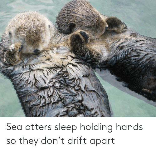 Otters: Sea otters sleep holding hands so they don't drift apart
