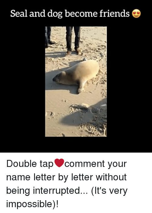 Memes, Seal, and Impossibility: Seal and dog become friends D Double tap❤️comment your name letter by letter without being interrupted... (It's very impossible)!