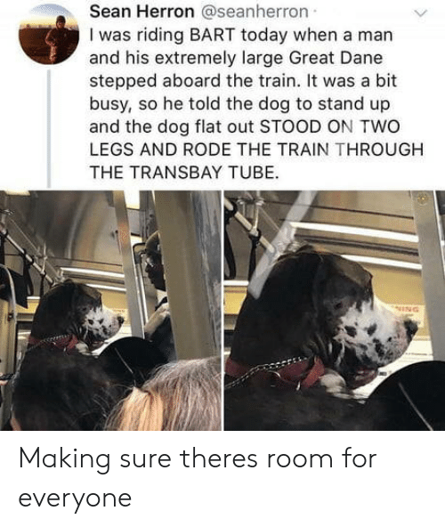great dane: Sean Herron @seanherron  I was riding BART today when a man  and his extremely large Great Dane  stepped aboard the train. It was a bit  busy, so he told the dog to stand up  and the dog flat out STOOD ON TWO  LEGS AND RODE THE TRAIN THROUGH  THE TRANSBAY TUBE. Making sure theres room for everyone