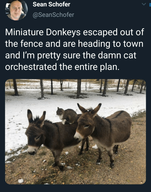 sean: Sean Schofer  @SeanSchofer  Miniature Donkeys escaped out of  the fence and are heading to town  and I'm pretty sure the damn cat  orchestrated the entire plan.
