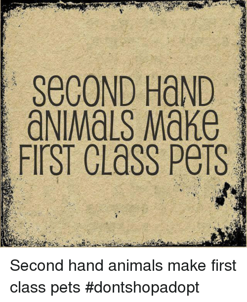 Animals, Memes, and Pets: SeCOND HaND  aNIMALS Make  FIrST CLaSS PeTs Second hand animals make first class pets  #dontshopadopt