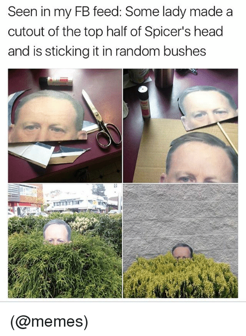 Funny, Head, and Meme: Seen in my FB feed: Some lady made a  cutout of the top half of Spicer's head  and is sticking it in random bushes (@memes)
