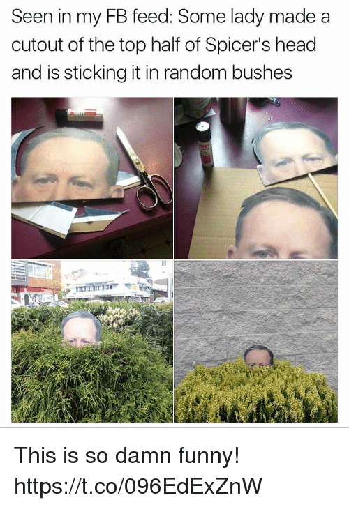 Funny, Head, and Random: Seen in my FB feed: Some lady made a  cutout of the top half of Spicer's head  and is sticking it in random bushes This is so damn funny! https://t.co/096EdExZnW